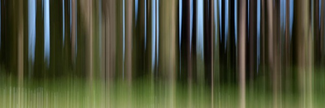 vertical panned trees
